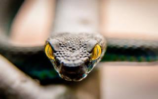 К чему снится змея которая пытается напасть сонник