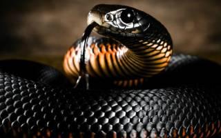 Сонник толкование снов змея