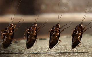 Сонник онлайн тараканы