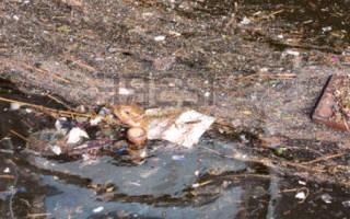 К чему снится грязная вода в реке сонник