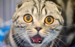 К чему снится убийство кошки сонник