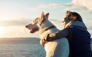 К чему снится играть с собакой сонник