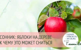 Видеть во сне яблоки на дереве сонник