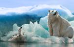 Белый медведь сонник миллера