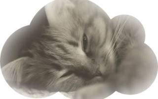 К чему снится умерший кот живым сонник