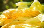 Видеть во сне кукурузу сонник
