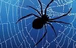 Сонник убирать паутину в доме