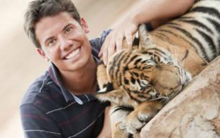 Гладить во сне тигра для девушек сонник