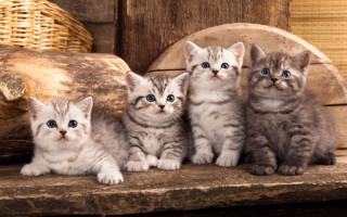 Сонник толкование котята