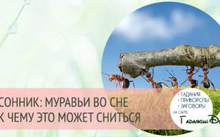 К чему снятся большие муравьи сонник