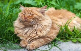 К чему снится большой рыжий кот сонник