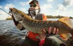 Рыбу держать в руках во сне сонник