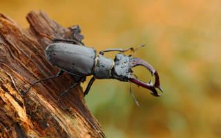 К чему снится большой жук с большими сонник