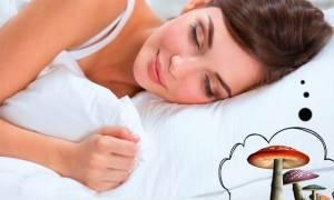 Собирать грибы с покойником во сне сонник