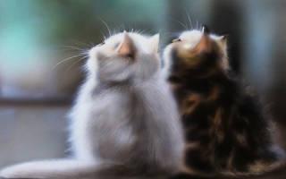 Видеть во сне как кошка рожает котят сонник