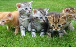 К чему снятся котята много маленьких женщине сонник
