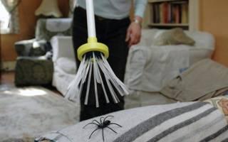 К чему снится убить большого паука сонник
