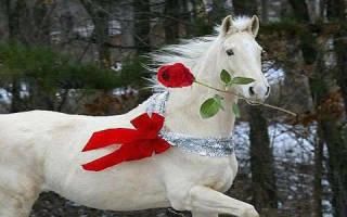 Сонник к чему снится белая лошадь