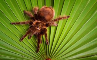 К чему снится паук с длинными лапами сонник