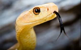 Желтая змея во сне сонник