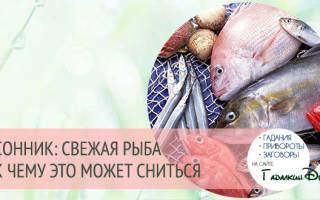 К чему снится рыба свежая крупная сонник