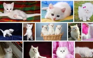 К чему снится белый котенок девушке сонник