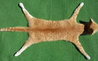 К чему снится мертвая кошка сонник