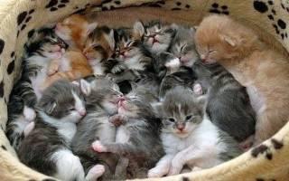 К чему снится рожающая кошка сонник