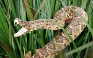 Во сне убить змею что означает сонник