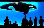 К чему снится кит женщине сонник