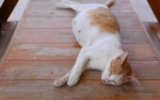 К чему снится беременная кошка сонник