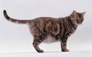 К чему снится котенок беременной сонник