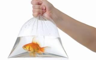 К чему снится рыба во сне мужчине сонник