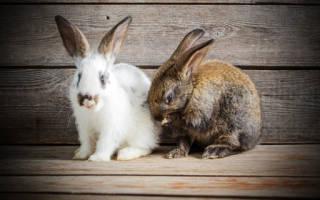 К чему снится белый кролик сонник