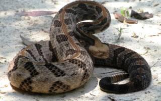 Видеть змею во сне женщине сонник