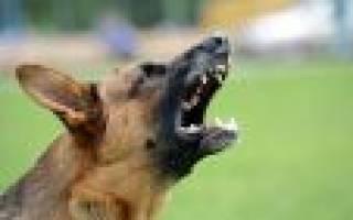 К чему снится лающая собака сонник