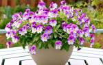 К чему снятся цветы в горшках сонник