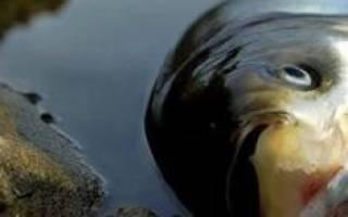 К чему снится много мертвой рыбы сонник