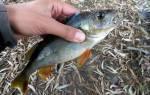 К чему снится собирать рыбу руками сонник