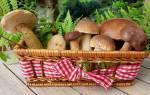 К чему сниться собирать грибы для женщины сонник
