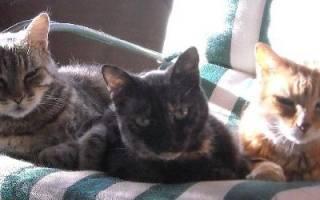 Видеть во сне много кошек что означает сонник