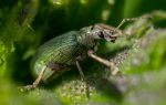 Видеть во сне жуков сонник