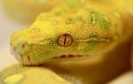 К чему снится синяя змея сонник