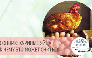К чему снятся яйца куриные сонник