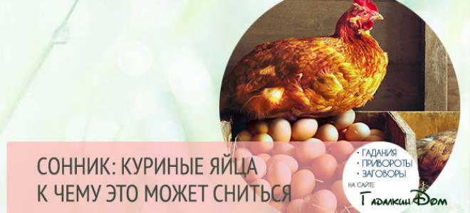 Сонник к чему снятся яйца куриные