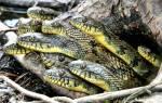 К чему снятся змеи много змей женщине сонник