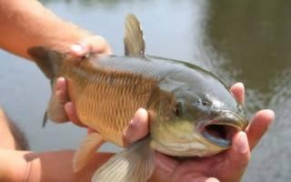 К чему снится ловить рыбу руками женщине сонник
