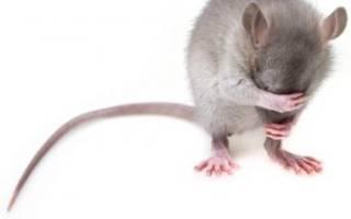 Давить ногами мышей во сне сонник