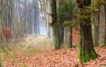 К чему снится лес сонник