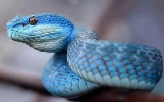 К чему снится убийство змеи сонник
